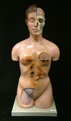 Vintage SOMSO AS40 Female Torso with Head Art Anatomical Model