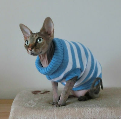 kitten BLUE Sphynx cat clothing, cat coat, jumper Nacktkatze Katzenbekleidung