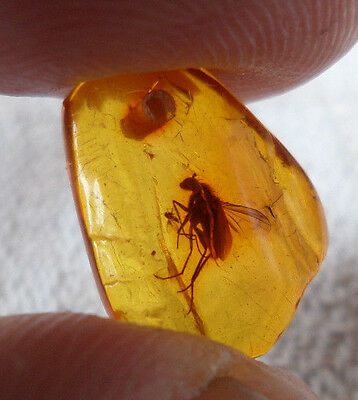 0,44gr Genuine Antique Clear Red Natural Baltic Amber Piece Pendant with insect