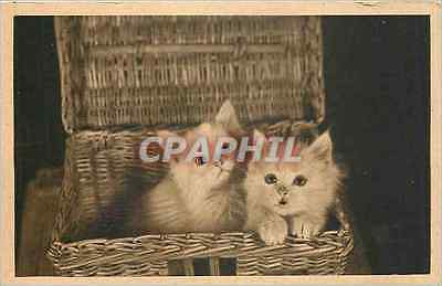 CPA Chats Chatons