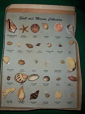 30 RARE & UNUSUAL Vintage SHELLS From Around the World with Names+Origin GENUINE