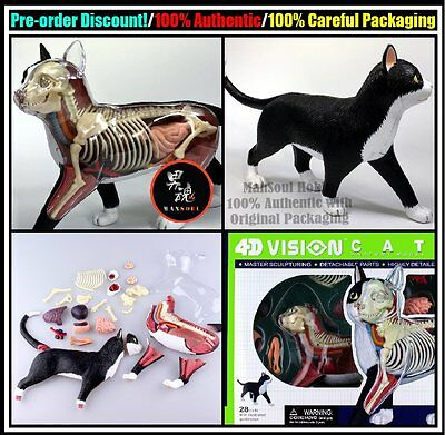 MSH Pre Order New 4D VISION Animal Dissection No 29 Cat Anatomy Model Figure