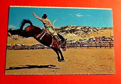 Cody WY Rodeo Capital of the World Chrome Vintage Postcard PC7125