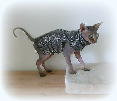 kitten SNAKESKIN light cotton, clothes for a Sphynx cat, HOTSPHYNX, Sphinx cat
