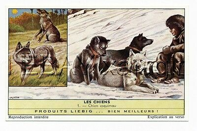 DOG Alaskan Malamute or Husky Sled Dogs & Wolf, 1960s Advertising Trading Card