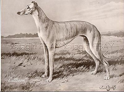 DOG Greyhound Named Exquisite Portrait, Beautiful 1930s Art Print
