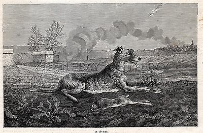 Dog Saluki Smooth-coated Gazelle Hound with Coursing Rabbit, 1880s Antique Print