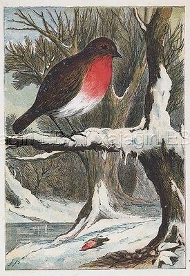 BIRD Robin Mourning Death of Mate in WInter Snow, Antique 1870s Chromolith Print