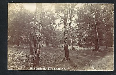 Evening in Sherwood Nottinghamshire (1906 RP) by CR