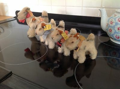 vintage steiff Fox Terriers,steiff Toy Dogs,5 Miniature Foxy,All Ids.