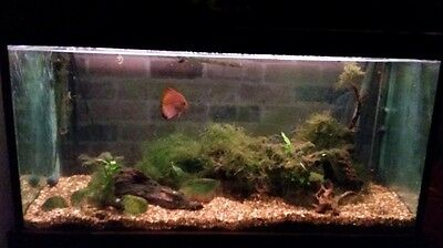 4ft fish tank with filter and lights heaters and cabinet