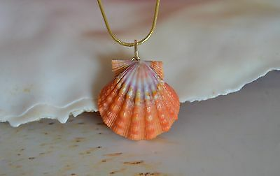 Gorgeous Red~Orange Hawaiian Sunrise Shell (Pecten Langfordi) made with 14K Gold