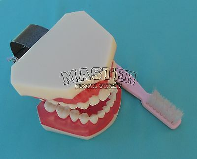 Dental Teaching Macro Model XL Hygienist Demo study with Toobrush Over-sized