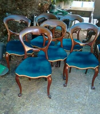 Superb set of 6 Victorian walnut cabriole leg dining chairs restored ready to go