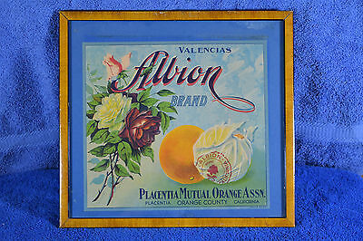ORIGINAL ALBION CRATE LABEL FRAMED ORANGE CNTY CALIF PLACENTIA 1930s