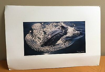 Humpback Whale Print By Peggy Stap 1997