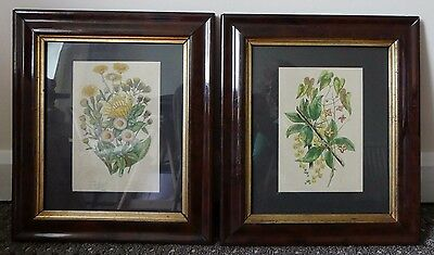Pair of antique (1880) botanical steel engraved litho colour prints