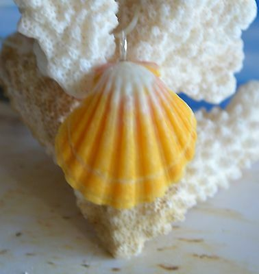 Jumbo Hawaiian Sunrise Shell (Pecten Langfordi) + 8.8 mm Silver Blue Akoya Pearl