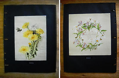 2 Large Antique Victorian Christmas Cards by Prang Dandelions Daisies (p.448)