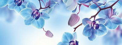 'Eurographics dt40016 – Glass – Blue Orchids 30 x 80 cm