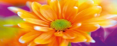 "Eurographics, Pannello decorativo in vetro, motivo: ""Orange Daisy"", 50 x 125 cm,"