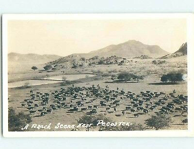 Pre-1950 rppc COWS ON CATTLE RANCH Pecos Texas TX HM3395