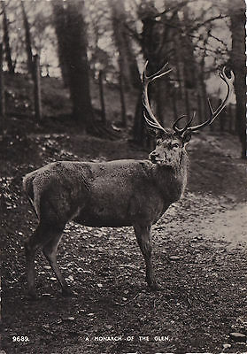 Scotland postcard RP MONARCH OF THE GLEN