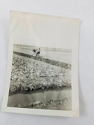 Snapshot Photograph 50's Plowing a Field Black & White  S01