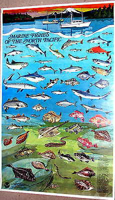 """Vintage NOAA Marine Fish Poster """"Marine Fishes of the North Pacific"""""""