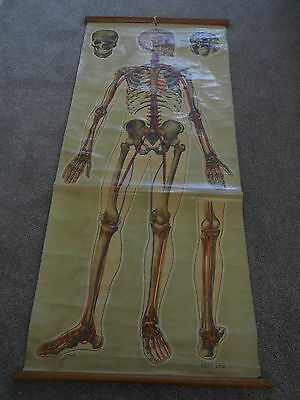 Antique 1940's  Anatomical Canvas Poster Picture - J.Teck. St Johns Ambulance