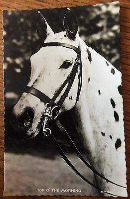 Vintage Valentine's Photo Horse Postcard - Spotted Pony - Mint Condition Card