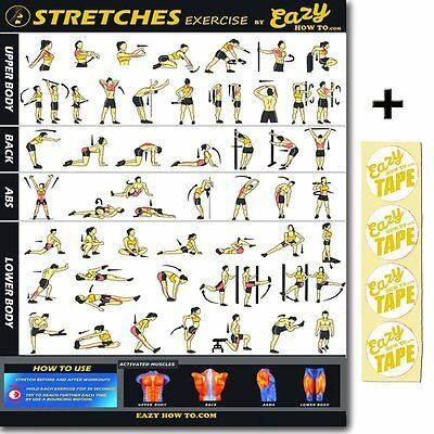 HOME GYM EXERCISES Professional Fitness Gym Wall Chart