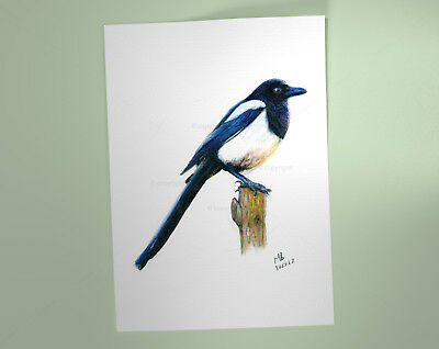 Magpie Art Print, British Garden Bird, of watercolour pencil drawing
