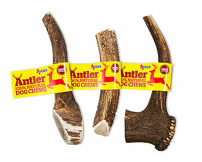 ANTLER DOG CHEWS Antos Small Medium Large XL Stag - 100% Natural Chew - Calcium