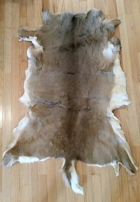 Cougar Fur Skin with No Head or Arms