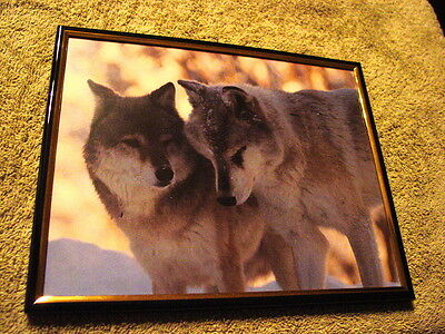 WOLVES ( WOLF ) 8X10 FRAMED PICTURE #2 ( poster )