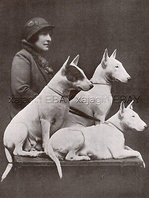 DOG Bull Terrier Champions & Beautiful Woman Owner, Vintage Print 1930s