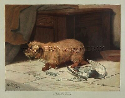DOG Cairn Terrier Kills Pigeon Dove Guilty Look, Large 1880s Antique Color Print