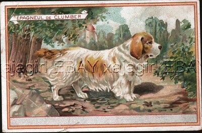 DOG Clumber Spaniel, Victorian Advertising Trade Card Trading, French C. Beriot