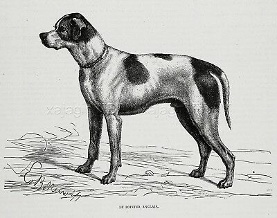 Dog English Pointer Braque Dog Breed ID'd, 1870s Antique Engraving Print