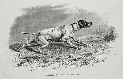 Dog English Pointer Female Named Juno, 1870s Antique Engraving Print