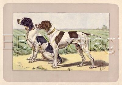 DOG English Pointer, Rare Antique 100-Year-Old French Dog Print