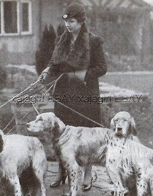 DOG English Setters of Eadlington Kennel Prestbury England, Vintage Print 1930s