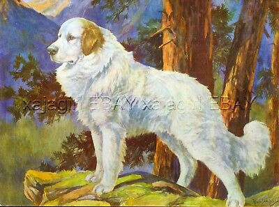 DOG Great Pyrenees, Beautiful 1930s Color Linen Print by Nina Scott-Langley
