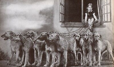 DOG Irish Wolfhound Little Girl Holds Onto 8! Barr Kennel, Vintage Print 1930s