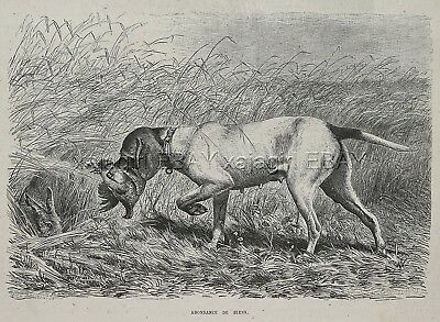 Dog Pointer Retrieves Bird & Points Rabbit-- Good Dog! 1880s Antique Print