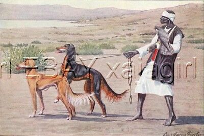 DOG Saluki Dogs, FALCONRY, Falconer 85 Year Old Print