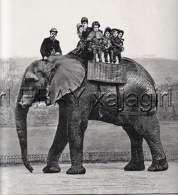 Elephant Jumbo Gives Children Ride at Zoo, Large 1880s Antique Print
