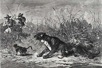 Leopard Hunting in Algeria, Cubs, Large 1860s Antique Engraving Print & Article