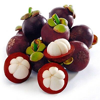 Very rare Purple Mangosteen fruit fresh viable 3 seeds